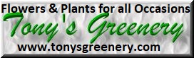 Tony's Greenery – NYC Florist for All Occasions